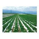 オークラ(大倉) 農ポリ 白黒マルチ こかげマルチ デラックス 0.025mm×95cm×200m 3本入