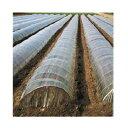 オークラ(大倉) 透明 一般用 農ポリ 0.1mm×230cm×100m 1本入 農業資材 園芸用品 家庭菜園 マルチフィルム
