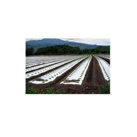 岩谷 イワタニ 菜園用 防虫シルバーマルチ 0.02mm×95cm×50m 農業資材 園芸用品 家庭菜園
