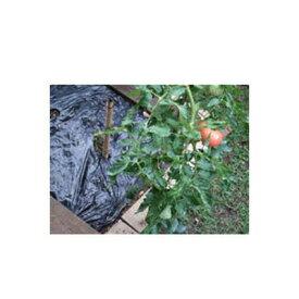 岩谷 イワタニ 菜園用 黒マルチ 0.02mm×95cm×50m 農業資材 園芸用品 家庭菜園