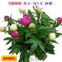 母の日 花 芍薬花束 10本束でお届け カラーMIX