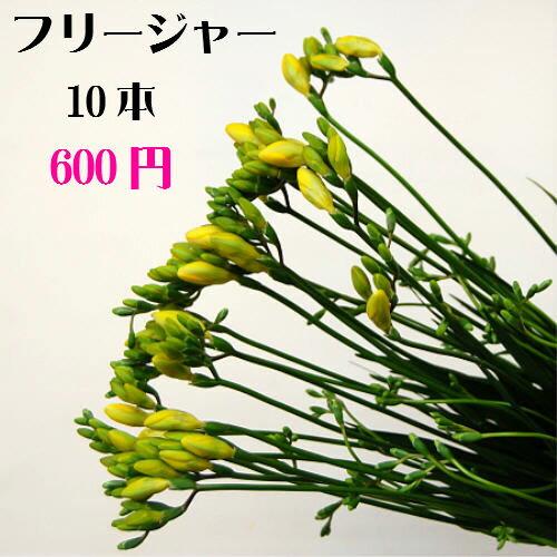 フリージャー 10本【RCP】【HLS_DU】お正月 松 千両 迎春