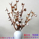 ドライフラワー 綿の木 コットンフラワー 5本束 クリスマス送料無料 あす楽対応
