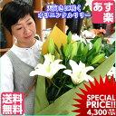 母の日 花 クリスタルブランカ 花 ギフト百合 大輪 お供え ホワイトデー 誕生日 記念日 カサブランカ