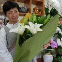 花 ギフト クリスタルブランカ 大輪 百合 花束お供え 還暦祝い 父の日 誕生日 記念日 カサブランカ