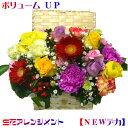 生花 アレンジメント NEWでか!選べる 4色卒業 入学祝 父の日 お誕生日 長寿の御祝 還暦祝い