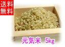 【送料無料】令和1年度産「元気米」玄米《5kg》(ピロール農法で作ったピロール米)【あす楽対象商品】【楽ギフ_のし宛書】【rice_RH_1205】05P27May16