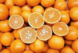 愛媛産しまなみオレンジ 大きさおまかせ指定不可 10kg送料無料【ただし、北海道・沖縄・一部離島は1個につき600円、東北地方は1個につき300円の送料補てんをいただきます】 秀品・優品混
