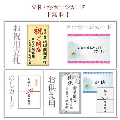 胡蝶蘭の立札・メッセージカード