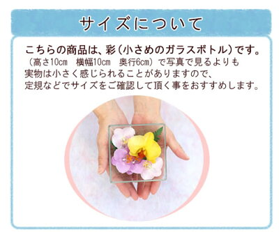 胡蝶蘭の雫ボトルフラワー彩(さい)【ギフト】【送料無料】