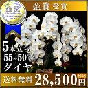 Daiya28500