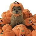 愛犬と一緒にハロウィンパーティー!キュートなハロウィンコスプレ・犬服のおすすめは?