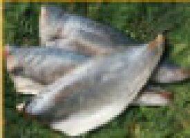 アジフィーレ(骨なし・ゼイゴ取り)20枚/5kg×2(10kg/40枚)
