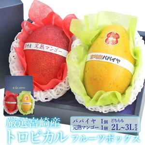厳選 国産 トロピカル フルーツボックス 完熟マンゴー パパイヤ(各1個)(2L〜3Lサイズ)宮崎産 宮崎マンゴー プレゼント 手土産 お返し 誕生日 フルーツ 景品 出産 フルーツ 果物 内祝い 贈り