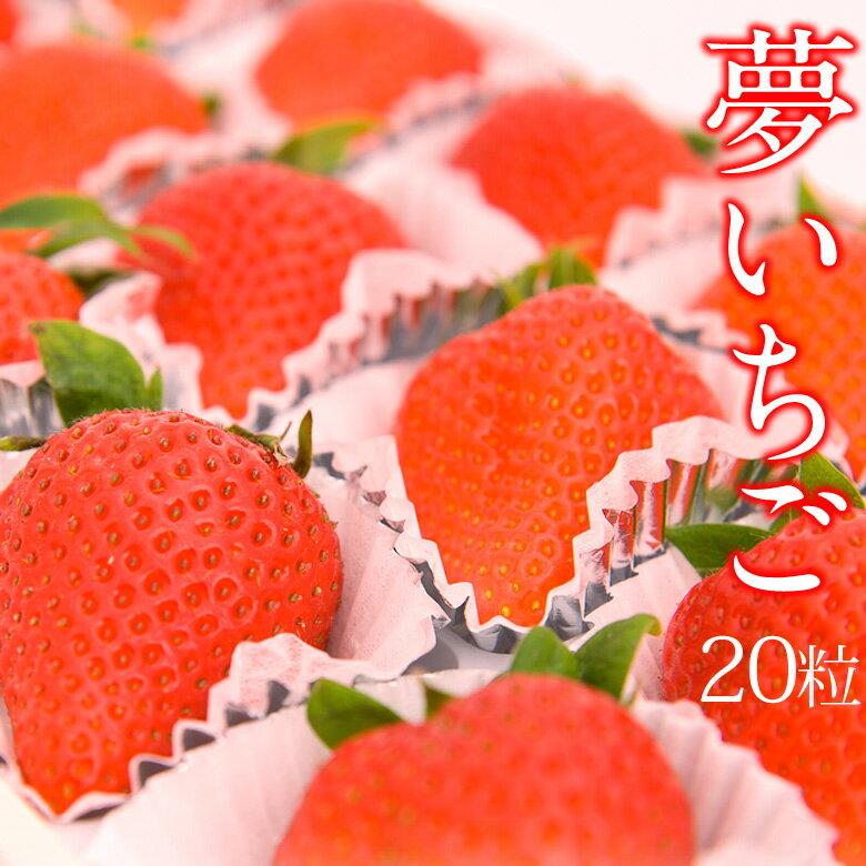 【大粒】夢いちご(品種:ゆめのか)20粒美容 甘い イチゴ 苺 お祝 プレゼント お礼 お返 誕生日 出産祝 ご挨拶 粗品 ホワイトデー 母の日 フルーツ 果物 内祝い 卒業祝 入学祝