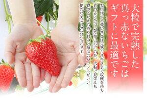 【大粒】夢いちご(品種:ゆめのか)20粒美容甘いイチゴ苺お祝プレゼントお礼お返誕生日出産祝ご挨拶粗品ホワイトデー母の日フルーツ果物内祝い卒業祝入学祝
