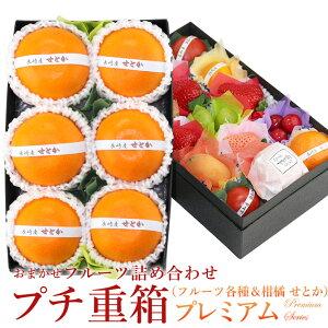 プチ重箱プレミアム FPJ-6(プチフルーツ15個 せとか6個)みかん 柑橘 蜜柑 詰め合わせ プレゼント 内祝い 誕生日 お供 お礼 快気祝い お祝い お供え 果物 くだもの ギフト 贈り物 お彼岸 ホワ