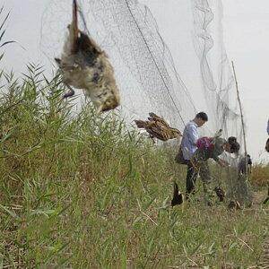 ネット 鳥よけネット 畑 3m×15m バードネット 長さカット 可能 防鳥ネット カラス対策 からすよけ ゴミネット 家庭菜園ネット 農業用品 資材 防鳥ネット ベランダ 鳥よけ 網 田畑 鳥害対策 送