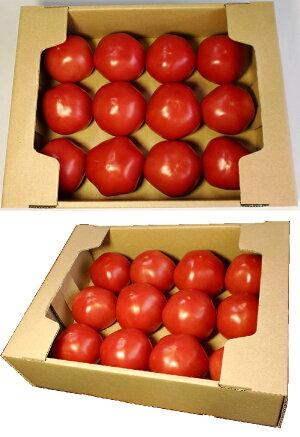 段ボールトマト1.5k用・トマト出荷