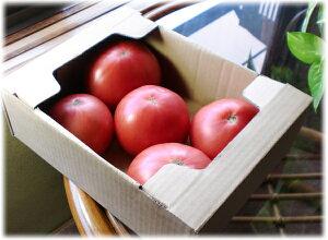 段ボールトマト1k用・トマト出荷