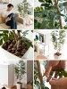 叶光触媒人工植物 V 猫灰人工消臭抗菌空气净化器高度 120 厘米到日常护理无催化剂加热和绿愈合光触媒人工植物灰 120 厘米
