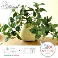 光触媒、人工観葉植物、観葉植物、フィットニア、網目草、卓上観葉植物、光触媒人工植物Fittonia(フィットニア)
