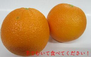 アメリカ産オレンジ 大玉24個入り特選オレンジ!