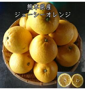 熊本県産ジューシーオレンジ