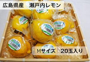 送料無料!!広島県産 瀬戸内レモンMサイズ 20玉国産 広島 檸檬 レモン れもん 瀬戸内