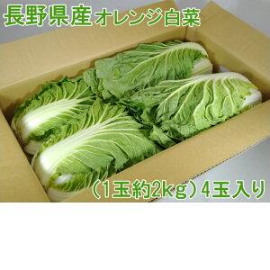 送料無料!! 長野県産オレンジ白菜1玉約2kg4玉入り