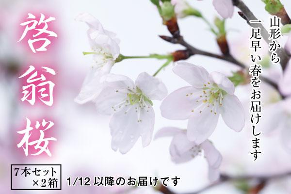 啓翁桜7本セット×2箱(1月〜3月お届け)(45-G)