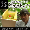 【送料無料】中塚さんの桃太郎ぶどう1キロ大房 化粧箱05P28Sep16 05P03Dec16