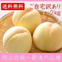 岡山白桃 最後の品種 ご自宅訳あり 2Kg 5〜8玉 栽培園限定商品 送料無料 希少品のため収穫予定数量完売と同時に販売終了致します