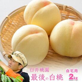 岡山県産白桃 最後の品種 ご自宅訳あり 2Kg 5〜8玉 栽培園限定商品 送料無料 希少品のため収穫予定数量完売と同時に販売終了致します【早期ご予約受付中】 期間設定 ポイント5倍