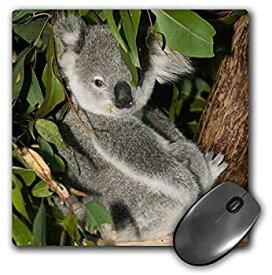 【中古】【輸入品・未使用】3droseオーストラリア、ブリスベン、Figツリーポケット、コアラbears-au01?wbi0119???マウスパッド、8?× 8インチ( MP _ 70224?_ 1?)