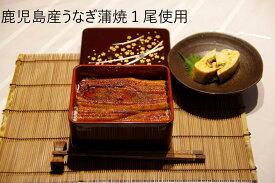 鹿児島産うなぎ蒲焼(大)4尾セット(約170g/尾x4)