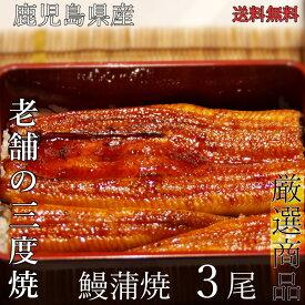 【送料無料】鹿児島産うなぎ蒲焼(大)3尾セット(約170g/尾x3)蒲焼たれ・さんしょう付夏 土用丑 お中元