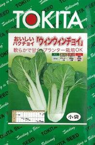 (葉物類)少し珍しい!炒め物〜漬物など用途は様々!パクチョイ ウィンウィンチョイ 種子 3ml入り