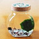 アクアリウム ガラス瓶 インテリア