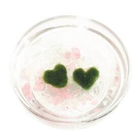 ハートまりも 2個入り ボール(平皿)カラー石 ハートまりもの育て方の説明付き