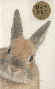 【お正月用品】ぽち袋S 4-808-9 ひょっこりウサギ アニマルフォトシリーズ 5枚入り★うさぎのポチ袋寸志小さいご祝儀袋/お札を折っていれるタイプ/お心付け封筒お祝い袋お小遣いにプリ