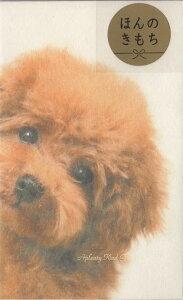 【お正月用品】ぽち袋S 4-808-8 ひょっこりトイプードル アニマルフォトシリーズ 5枚入★くろしば犬のポチ袋シール付き寸志小さいご祝儀袋/お札を折っていれるタイプ/お心付け封筒お祝