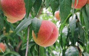 北限の桃ごろんごろんジャム