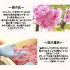 冷樱花樱花果冻 6 件 (樱桃果冻) (樱花樱花) 和樱花观赏秋田荣太郎 EI 可能已经被) 日本) (礼物) (季节性)