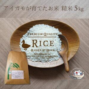 新米 令和2年産 アイガモ米 精米5kg 農薬や化学肥料を一切使わない栽培方法 コシヒカリ100% あいがも米 合鴨米 送料無料 兵庫県産 合鴨農法