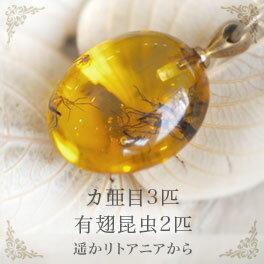 【天然琥珀】【musi148】虫入り琥珀 こはく ネックレス【コレクションランク】【インターナショナルアンバー協会認定正規品】【パワーストーン】