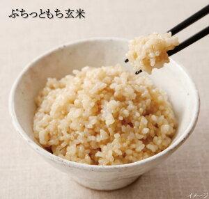 ぷちっともち玄米 15袋組 炊飯器ですぐ炊ける 簡単 玄米 (1袋300g(※2合)×15袋)【 玄米 炊飯器 炊ける 無洗米 玄米 ごはん ご飯 げんまい 美味しい玄米 おいしい玄米 おいしい 美味しい 送料無料