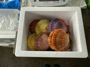 天草鮮魚店 魚介類 海鮮 人気 隠岐 西ノ島産 ヒオウギ貝10枚(時期により大小がありますがご了承ください) さしみ、酒蒸しにどうぞ 商品説明書を同梱します 贈り物 贈答 プレゼントに 送料無