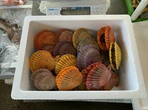 天草鮮魚店 魚介類 海鮮 人気 隠岐 西ノ島産 ヒオウギ貝30枚(時期により大小がありますがご了承ください) さしみ、酒蒸しにどうぞ 商品説明書を同梱します 贈り物 贈答 プレゼントに 送料無