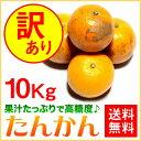訳あり たんかん ご家庭用 10kg【送料無料】 奄美大島 タンカン (みかん) 果物 フルーツ オレンジ 詰め合わせ